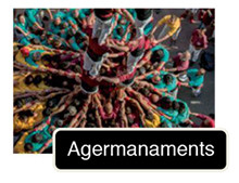 C agermanaments